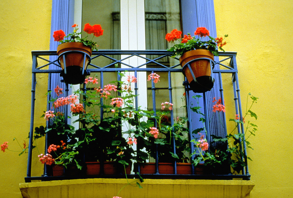 brightly painted window with flower boxes